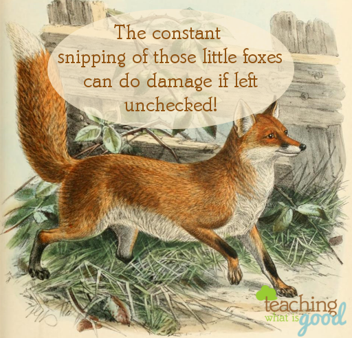 little foxes can rob us of joy!